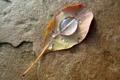 Картинка осень, вода, капли, лист