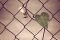 Картинка сердце, ограда, проволка