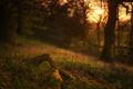Картинка солнце, деревья, закат, цветы, ветки, дерево, силуэт