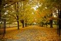 Картинка дорога, осень, деревья, природа, листва, ворота, Канада