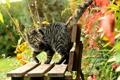 Картинка кошка, кот, листья, скамейка, природа, лавочка, лавка