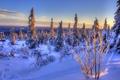 Картинка зима, снег, ели, Норвегия, Norway
