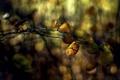 Картинка лес, листья, ветка