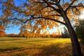 Картинка осень, небо, трава, деревья, закат, парк