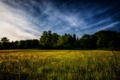 Картинка деревья, поле, небо, Весна