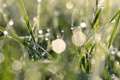 Картинка зелень, трава, капли, макро, роса, блики, фото