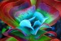 Картинка листья, цветок, растение, природа