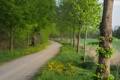 Картинка природа, дорога, дерево