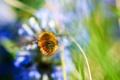 Картинка цветы, фон, растения, размытость, насекомое