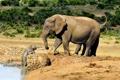 Картинка малыш, слоны, слониха, слонёнок