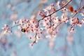 Картинка ветки, пчела, дерево, весна