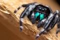 Картинка глаза, макро, паук, лапы, насекомое
