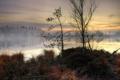 Картинка осень, трава, деревья, туман, озеро, доски, сухая