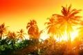 Картинка закат, tropical, тропики, пальмы, sunset