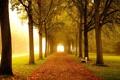 Картинка дорога, осень, листья, деревья, скамейка, туман, парк