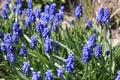 Картинка поле, макро, цветы, синева, весна, луг