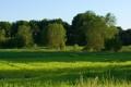 Картинка трава, тени, деревья, солнце, природа, пейзаж, листва