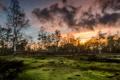 Картинка деревья, закат, природа