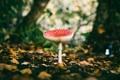 Картинка листья, деревья, грибы, боке