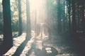 Картинка длинноволосая, лес, девушка, лучи, деревья