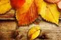 Картинка осень, фото, осенние обои, дерево, доски, листок, листья