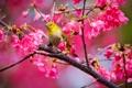 Картинка цветы, дерево, птица, bird, flowers