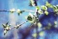 Картинка небо, листья, ветки, дерево