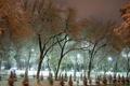 Картинка зима, иней, свет, снег, деревья, улица, елка