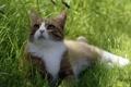 Картинка кошка, лето, трава, тень