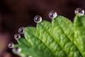 Картинка вода, капли, природа, лист, роса