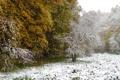 Картинка зима, снег, деревья, природа, фото