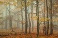 Картинка осень, лес, листья, деревья, туман, листва