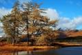 Картинка осень, деревья, пейзаж, озеро