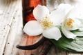 Картинка цветы, лепестки, spa