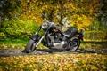 Картинка Special, Harley-Davidson, Fat Boy