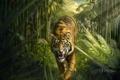 Картинка взгляд, тигр, хищник, джунгли