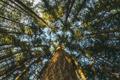 Картинка небо, листья, дерево, ствол, крона