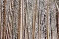 Картинка зима, лес, природа