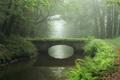 Картинка лес, пейзаж, мост