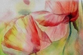 Картинка цветы, рисунок, маки