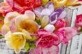 Картинка цветы, colorful, flowers, spring