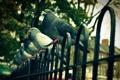 Картинка город, забор, голуби