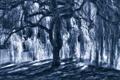 Картинка свет, синий, дерево, тень