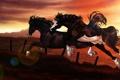 Картинка закат, прыжок, кони, колючая проволка, арт, забор