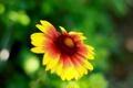 Картинка цветок, лето, макро, обои, ярко