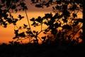 Картинка небо, листья, закат, природа, ветви, тишина, растение