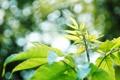Картинка зелень, листья, солнце, макро, лучи, природа, фото
