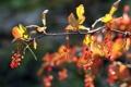 Картинка осень, макро, природа, ветка