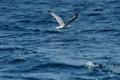 Картинка море, лето, вода, чайка, полёт