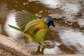 Картинка вода, птица, крылья, хвост